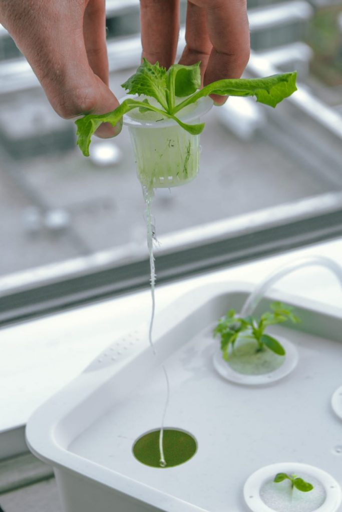 Hydroponic System with Masterblend Nutrients