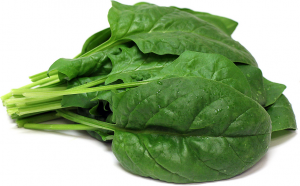 Hydroponics Europe Spinach