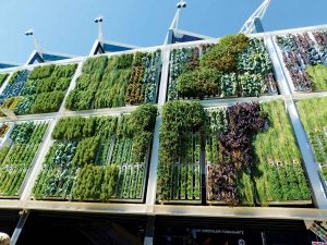 Hydroponics Wall Sustainably