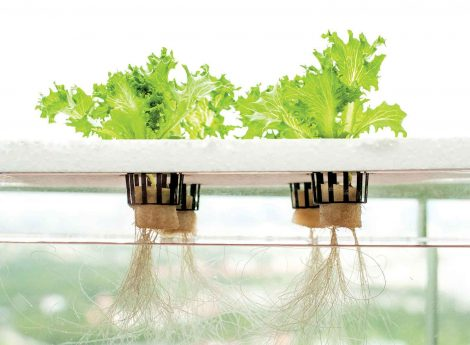 Hydroponics | Growing food at home sustainably