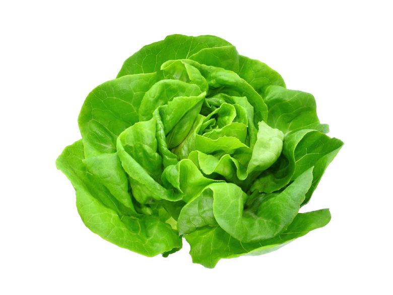 Hydroponics Europe Lettuce